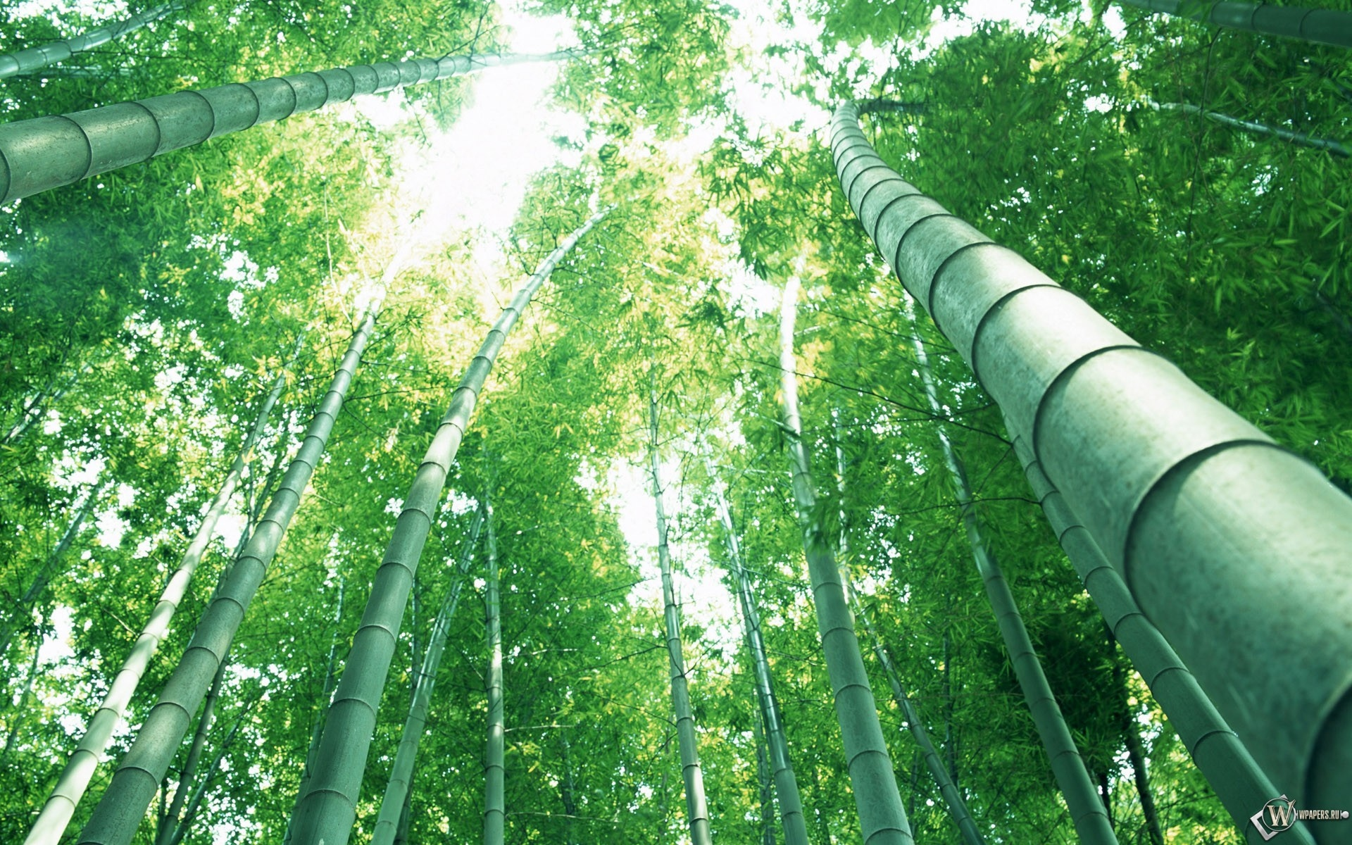 Бамбук 1920x1200