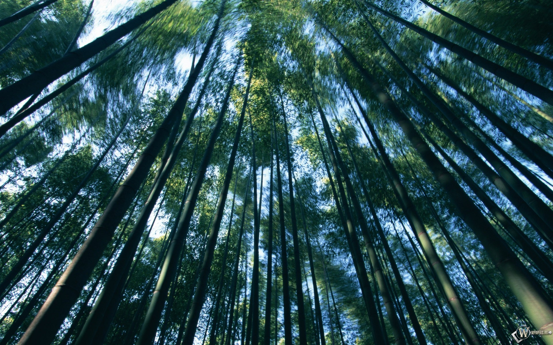 Заросли бамбука 1920x1200