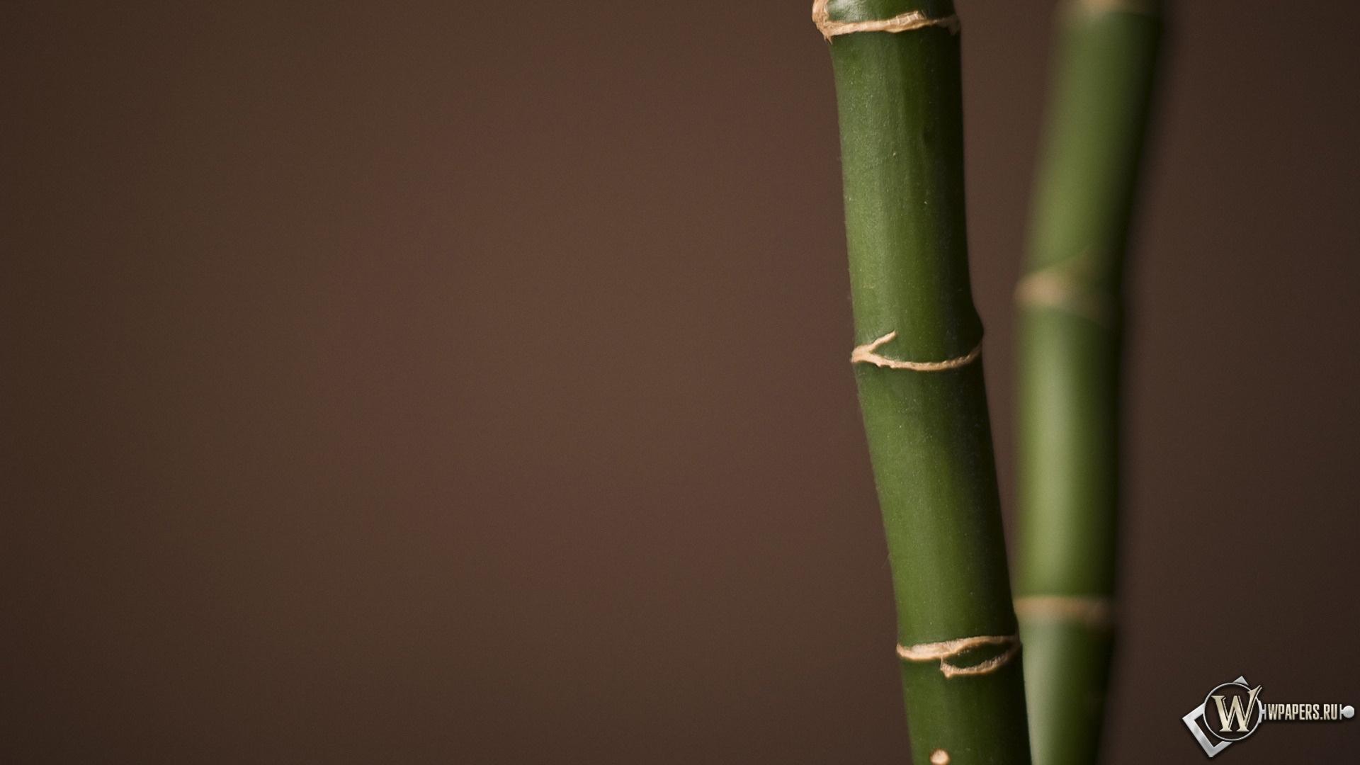 Мини Бамбук 1920x1080