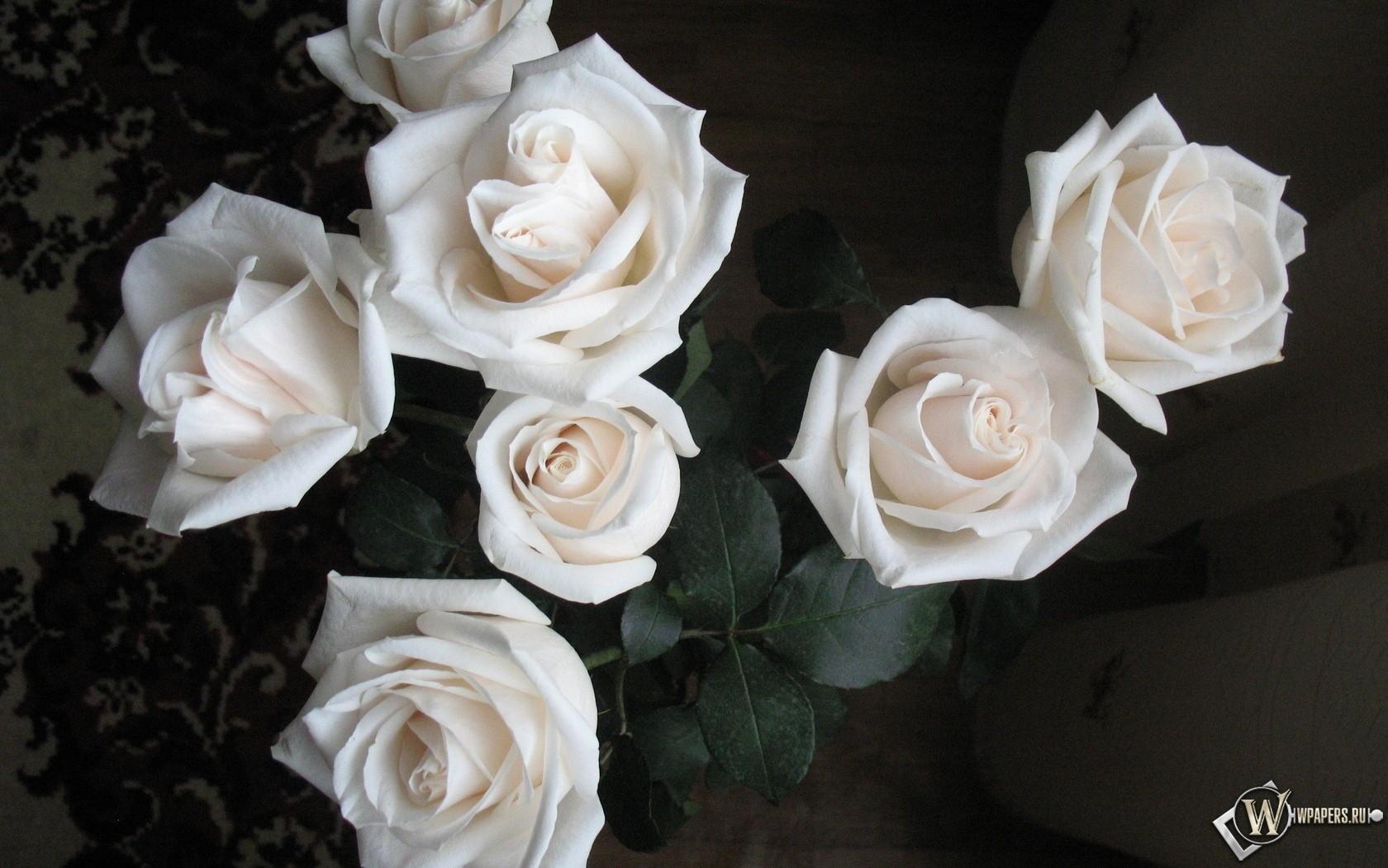 Белые розы 1680x1050