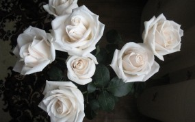 Обои Белые розы: Цветы, Белые розы, Цветы