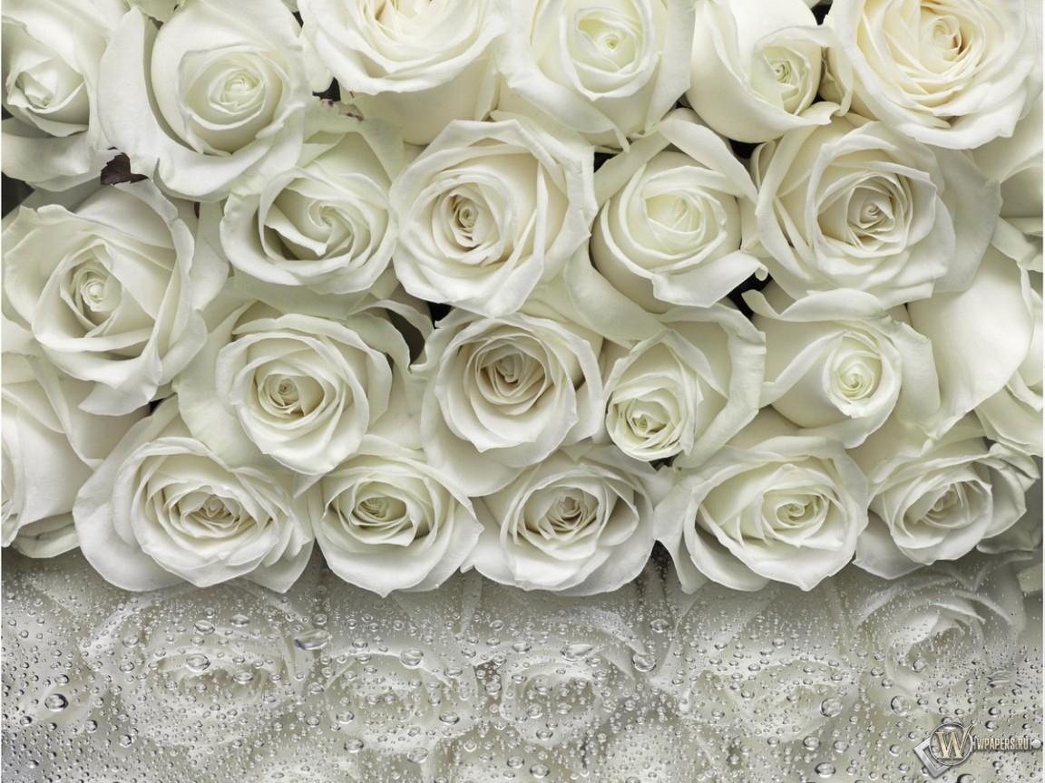 Много белых роз 1152x864