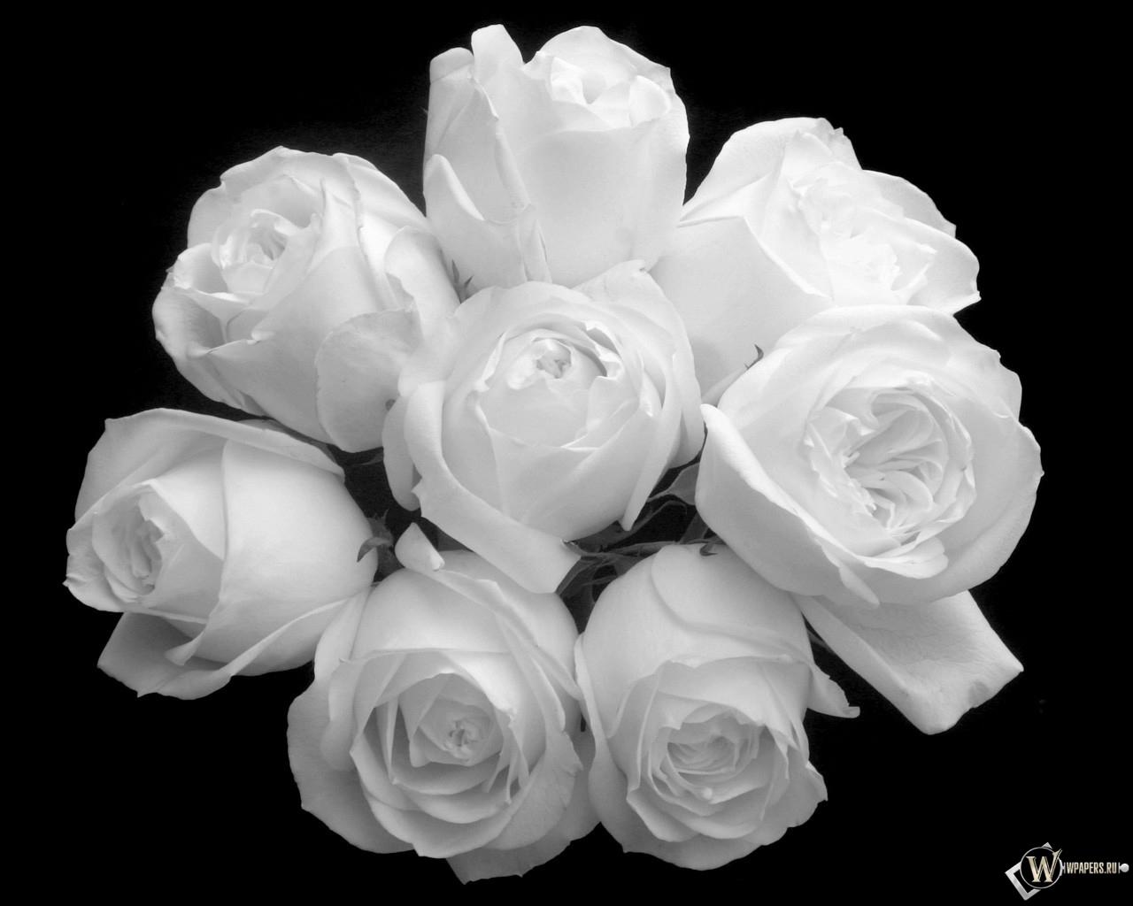 Букет белых роз 1280x1024