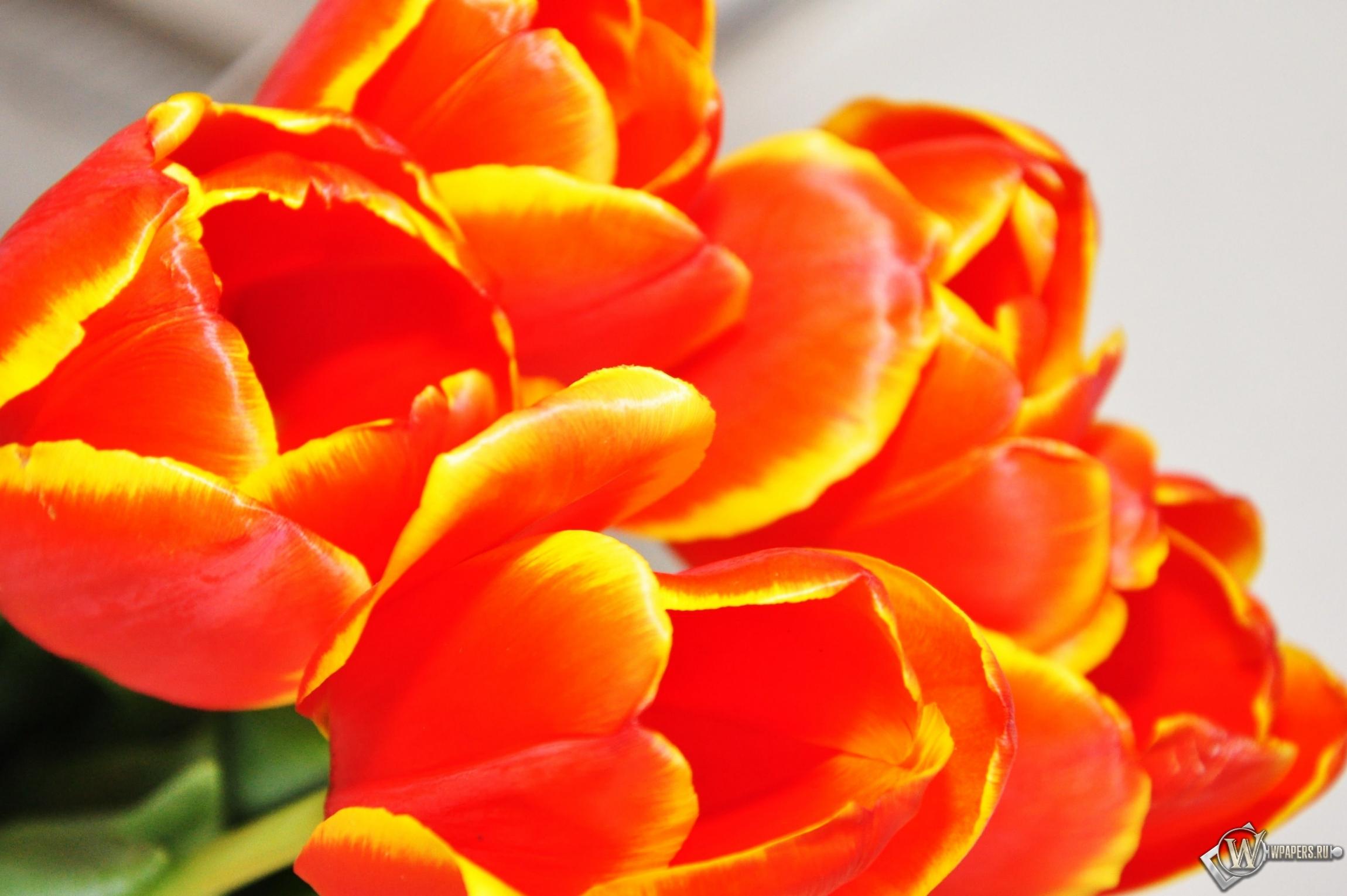 свое умение картинка тюльпаны для галины буква