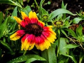 Обои Цветок: Цветок, Капли, Растения, Цветы