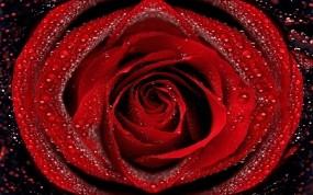 Обои Красная роза: Роза, Капли, Роса, Лепестки, Макро, Бутон, Цветы