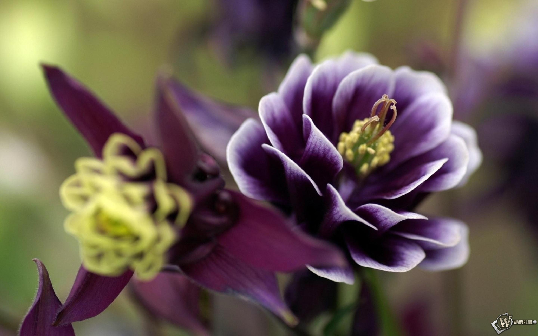 Фиолетовый цветок 2880x1800