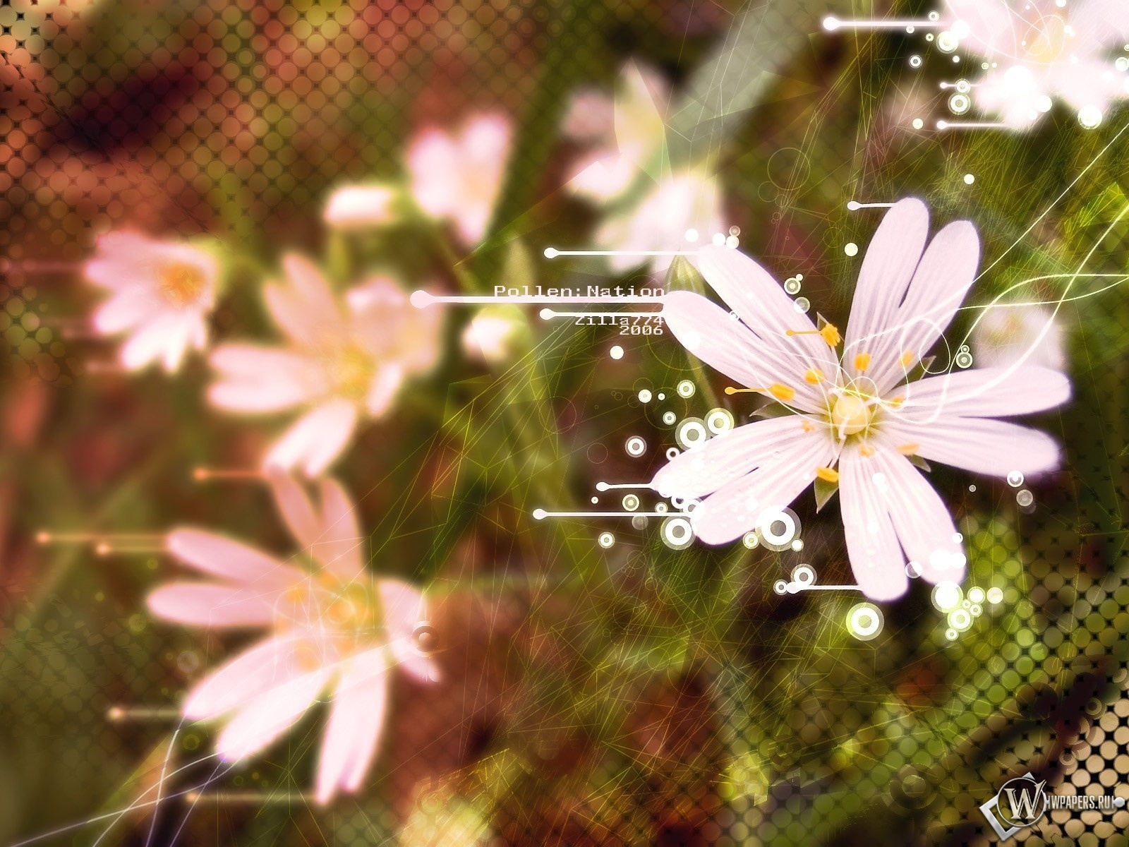 Белые цветы 1600x1200