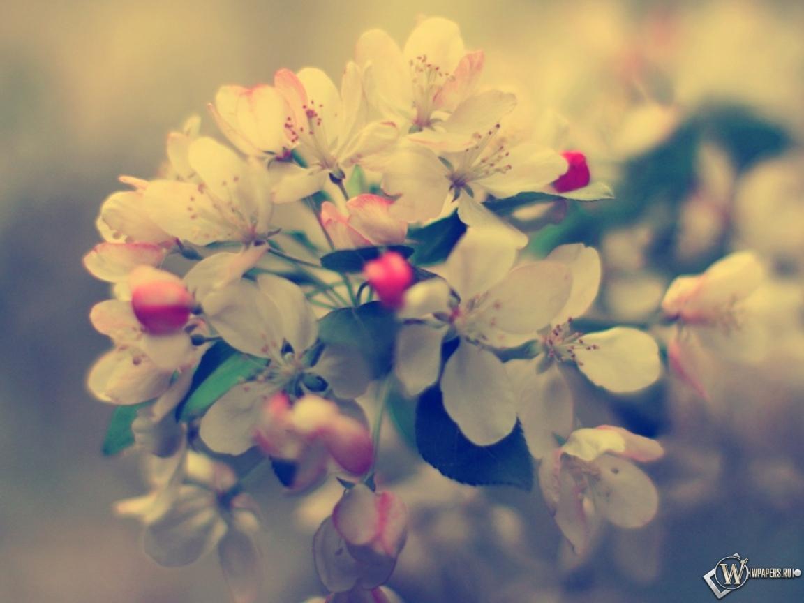 Фото весна природа на рабочий