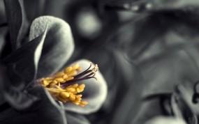 Обои Серый цветок: Цветок, Лепестки, Макро, Серый, Цветы