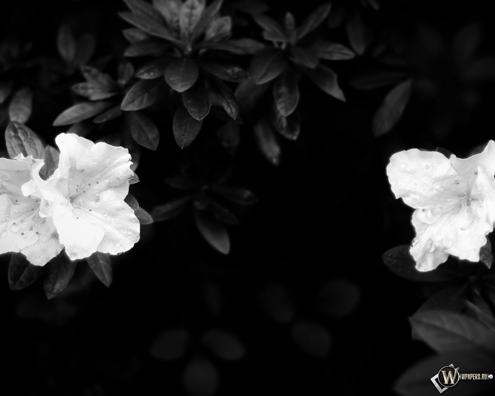 цветы на столе картинки черно-белые идеальное место