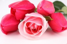 Обои Тюльпаны и розы: Цветы, Розы, Тюльпаны, Цветы
