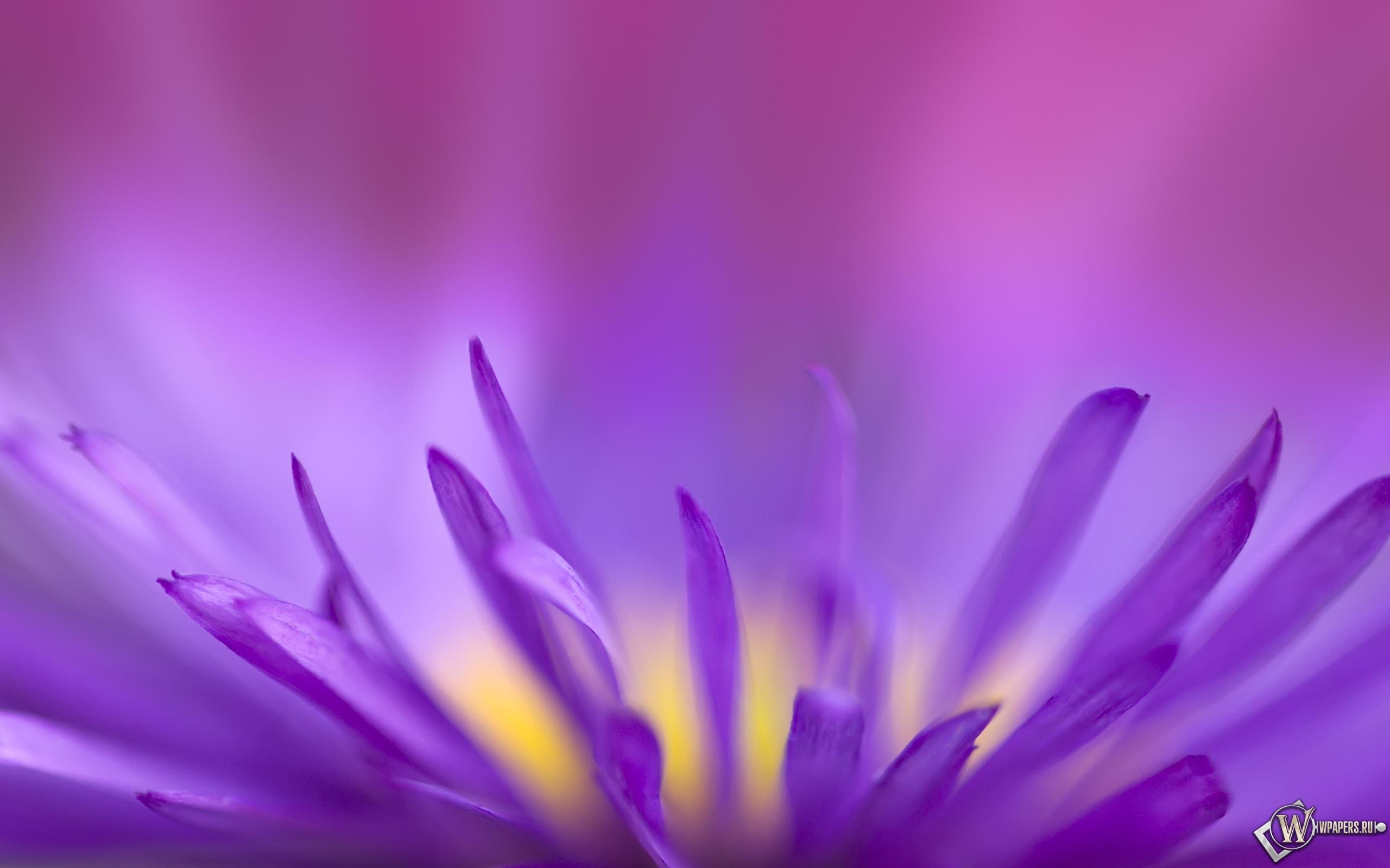 Цветок в приближении 2560x1600