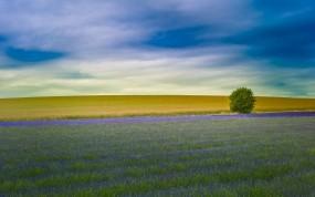Обои Лавандовое поле в Англии: Поле, Небо, Лаванда, Цветы