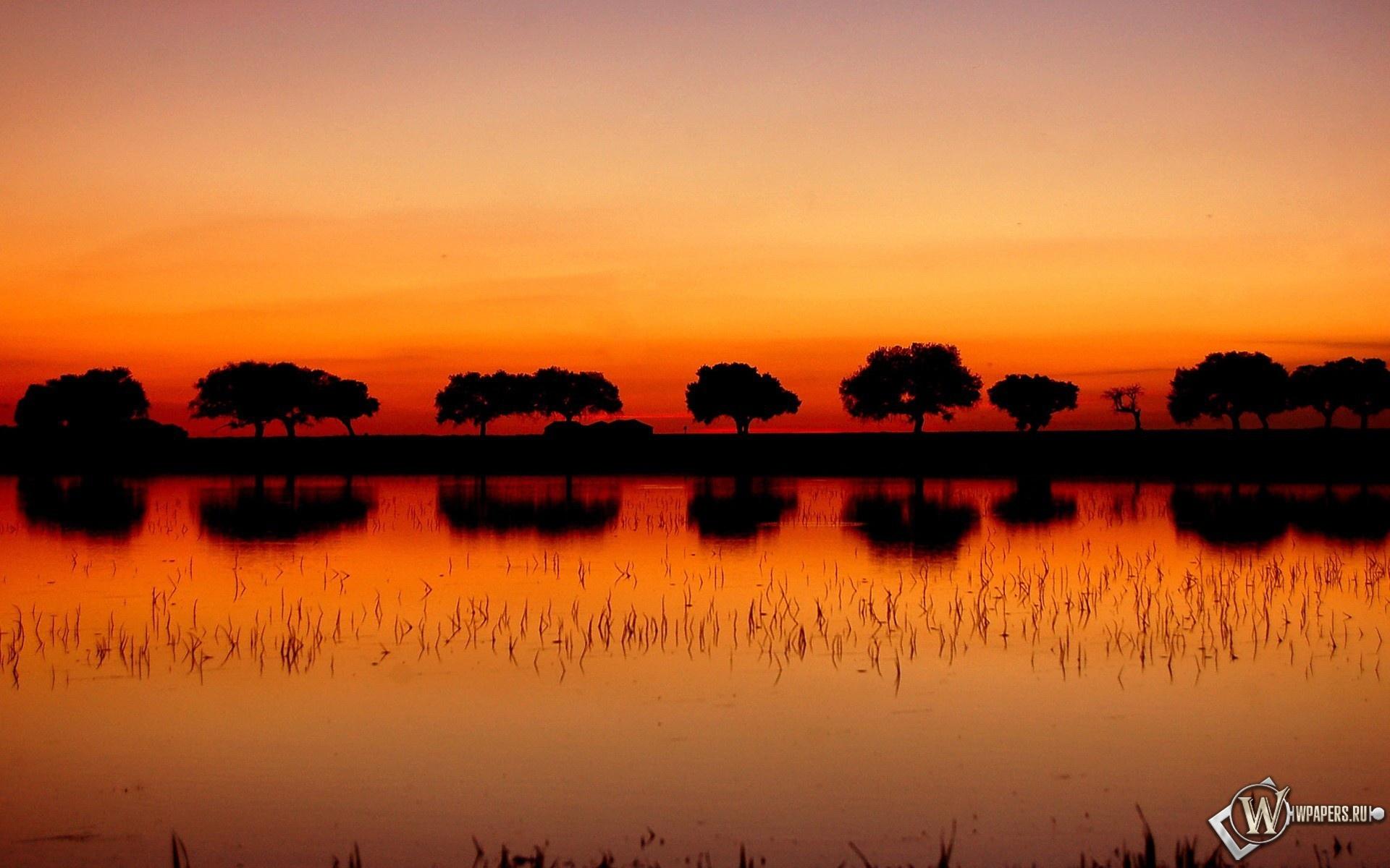 Деревья в Африке 1920x1200