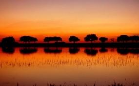 Деревья в Африке