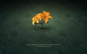 Обои Жёлтые лилии на асфальте: Цветок, Асфальт, Лилия, Цветы