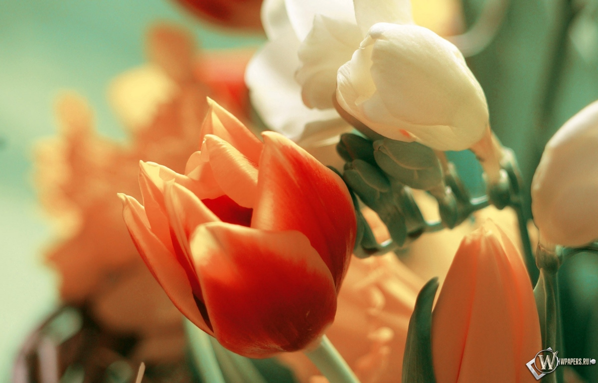 Букет тюльпанов 1200x768
