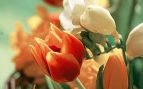 Обои Букет тюльпанов: Лепестки, Букет, Тюльпан, Цветы
