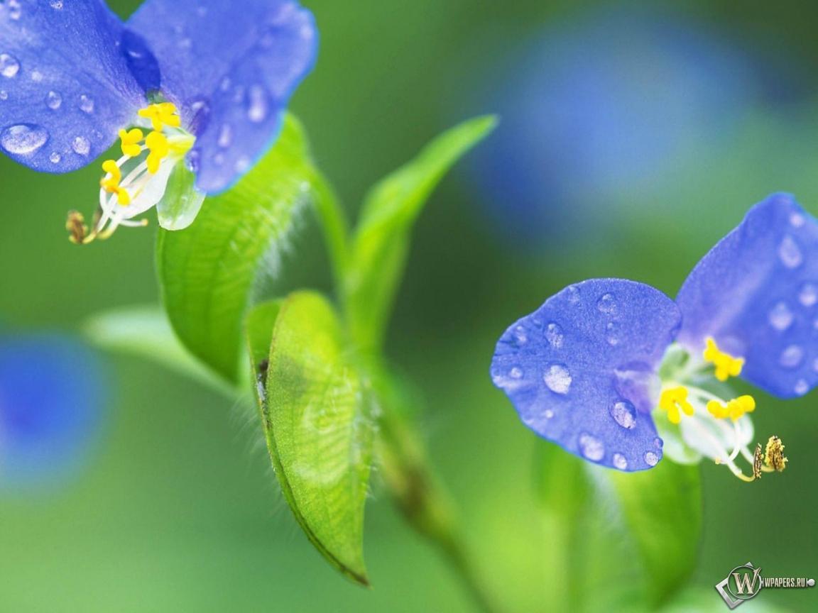 Цветик-семицветик 1152x864