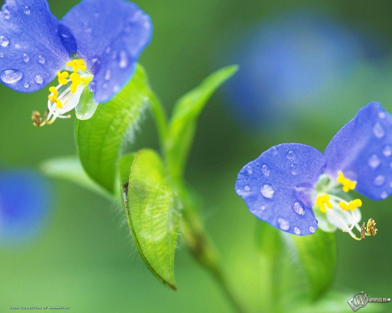 Цветик-семицветик 1280x1024