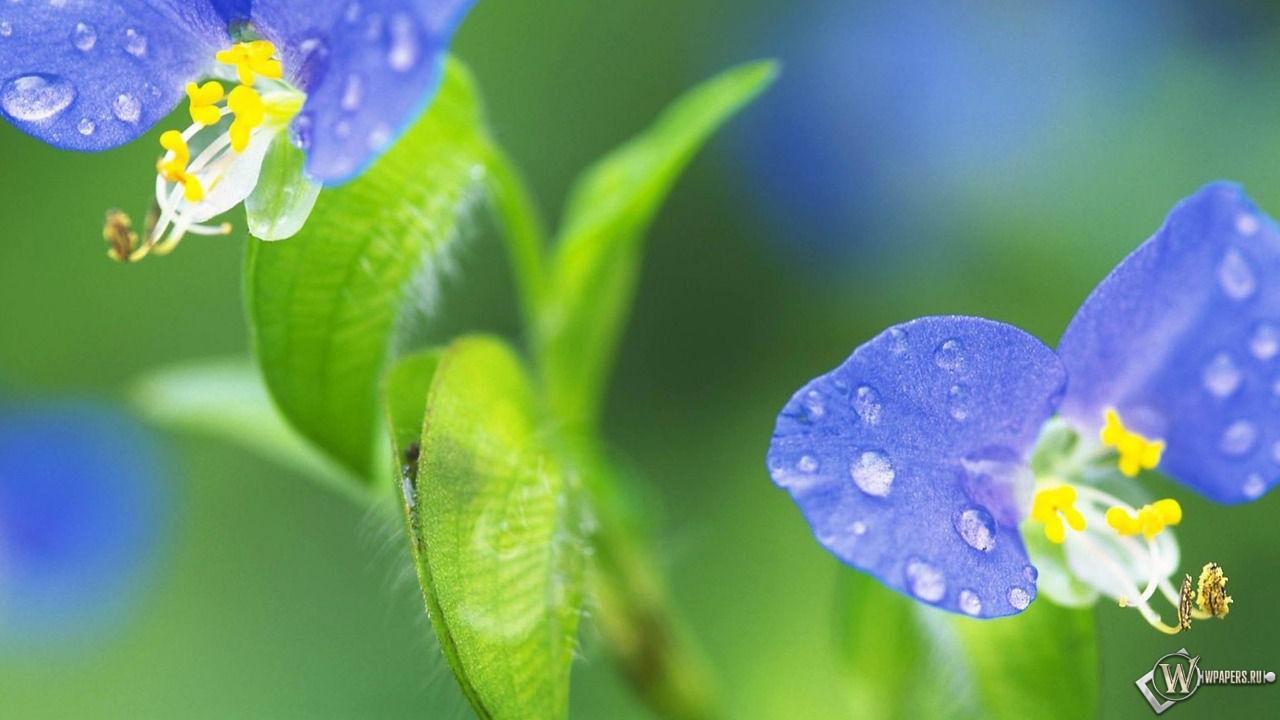 Цветик-семицветик 1280x720