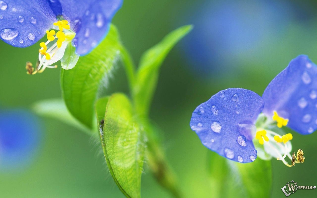 Цветик-семицветик 1280x800