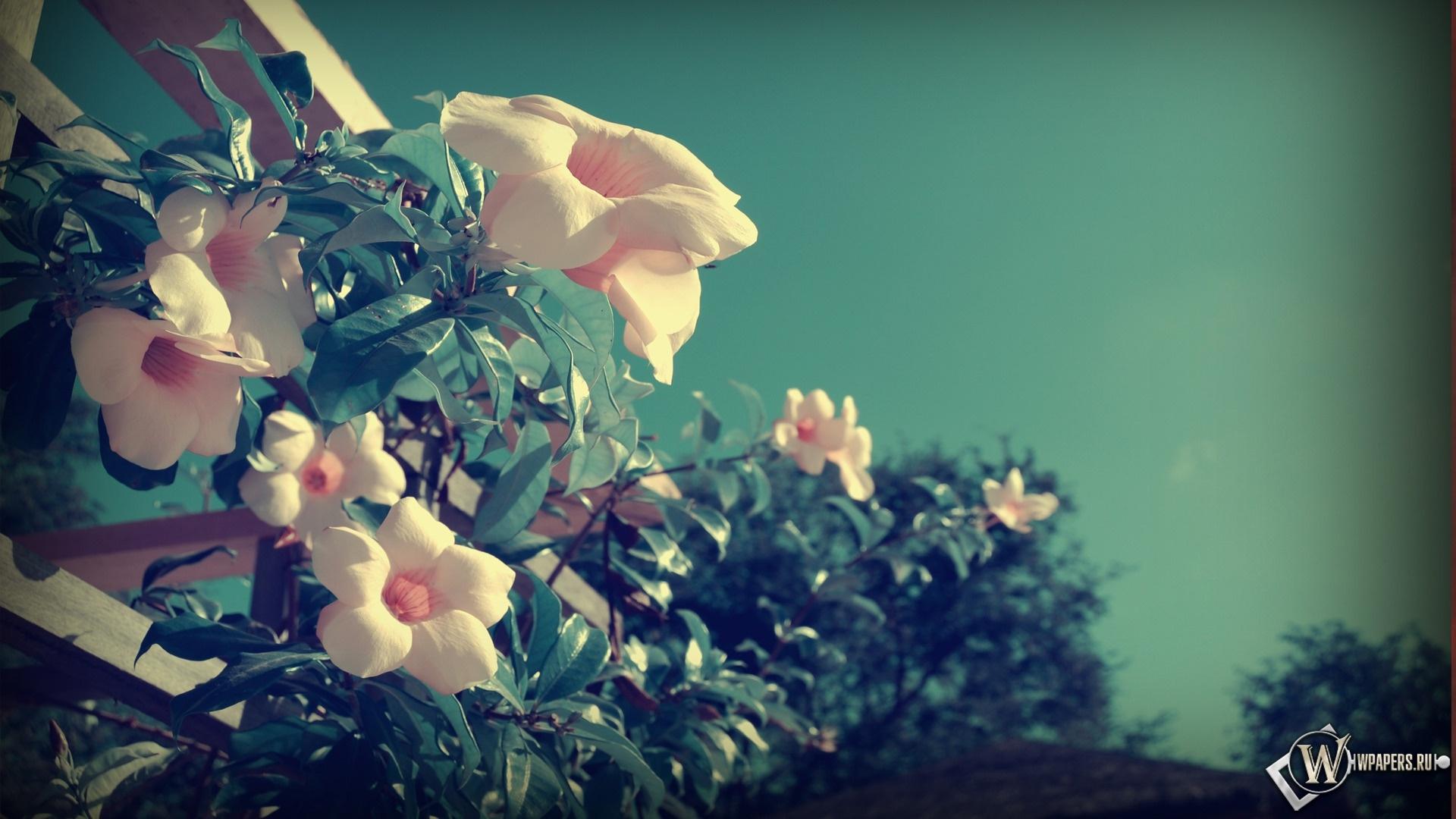 Балконные цветы 1920x1080