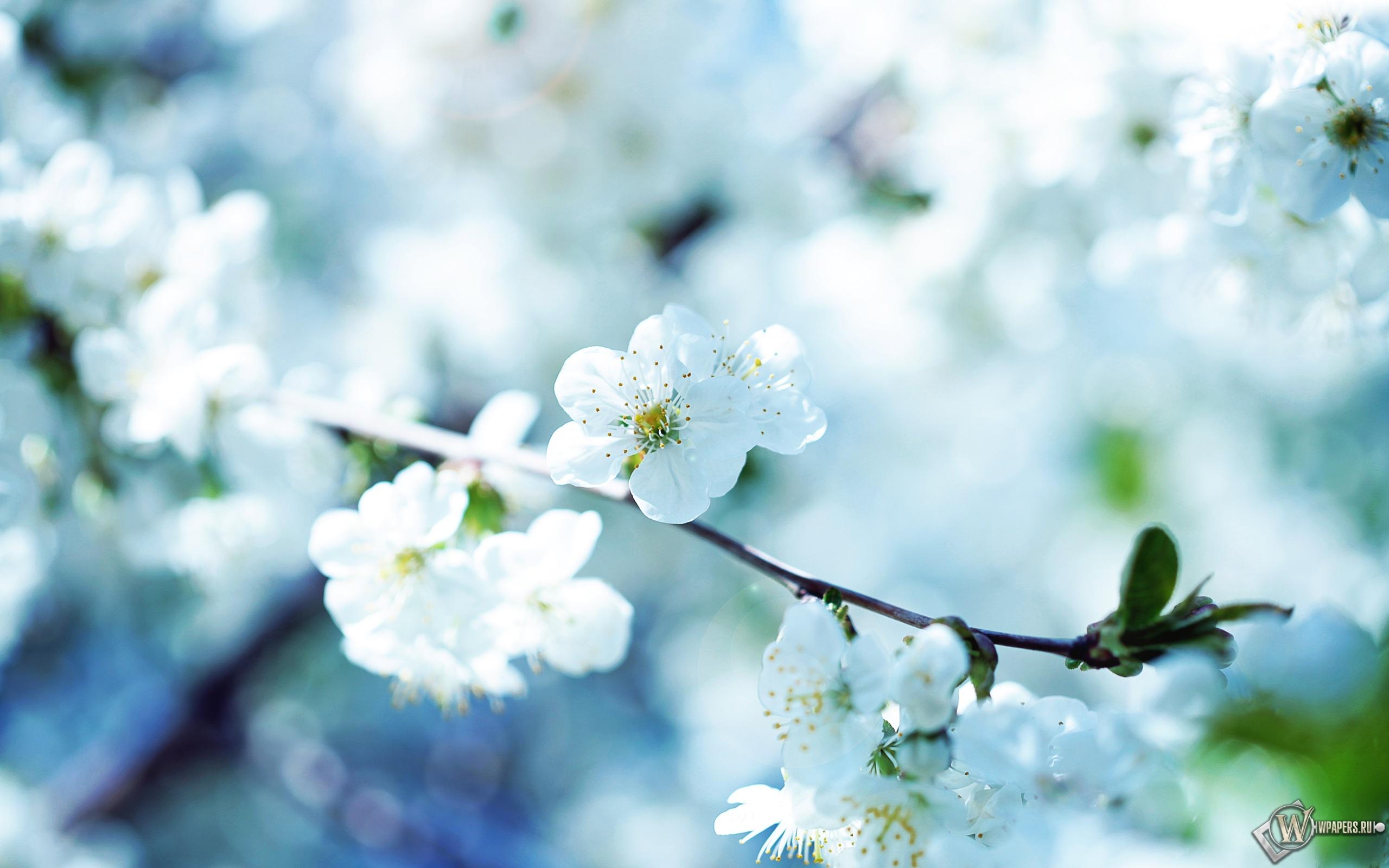 Весенние цветы 2560x1600