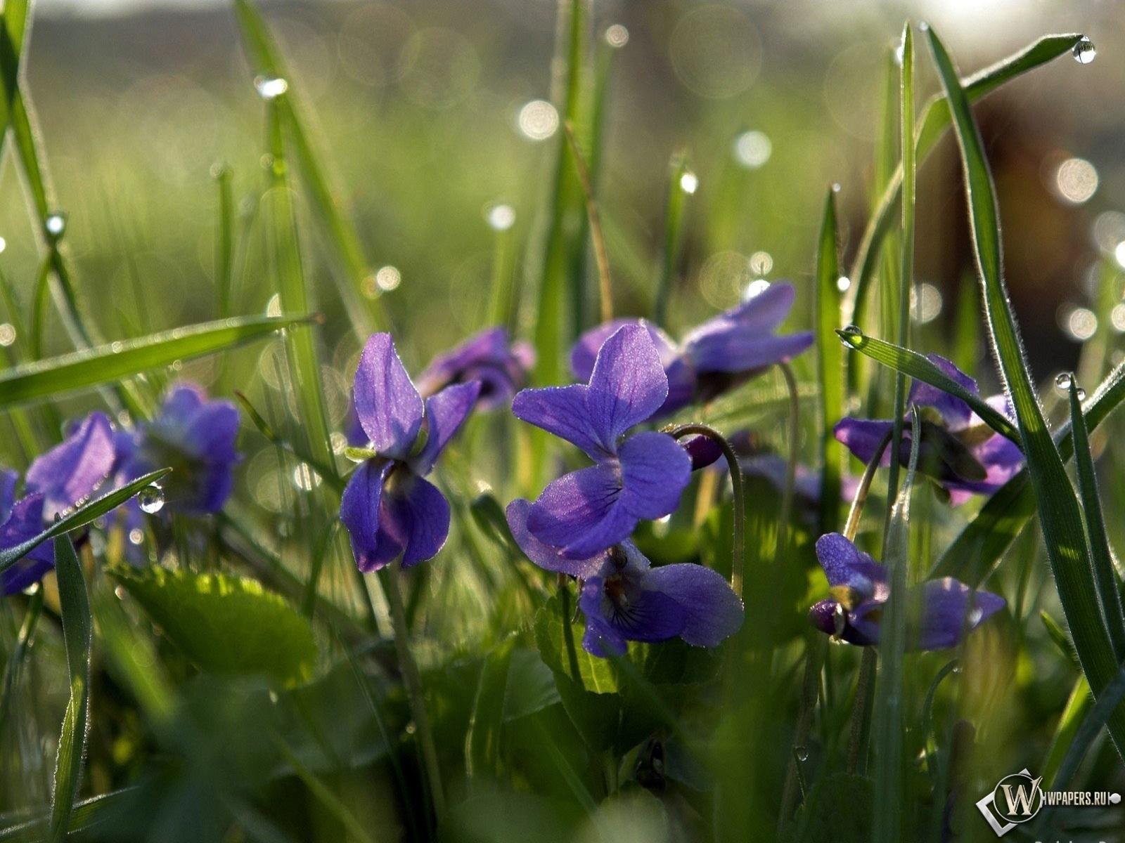 Цветы дождя 1600x1200