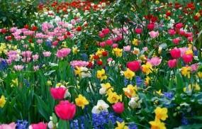 Обои Цветущее великолепие: Цветы, Весна, Цветы
