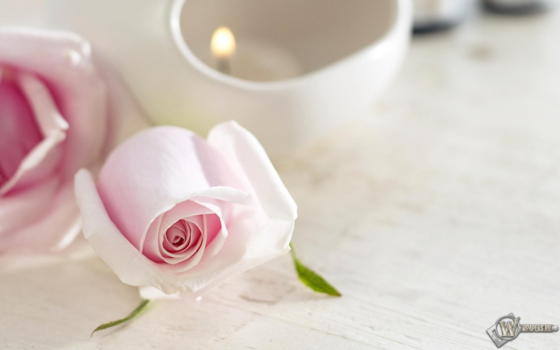 Розовые розы 1920x1200