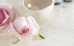 Обои Розовые розы: Роза, Цветок, Свеча, Цветы