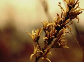 Осенний цветок