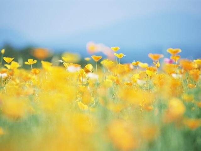 Жёлтая поляна
