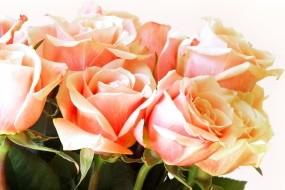 Обои Букет роз: Лепестки, Цветы, Розы, Букет, Цветы