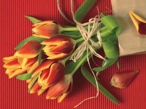 Обои Букет тюльпанов: Тюльпаны, Букет, Цветы