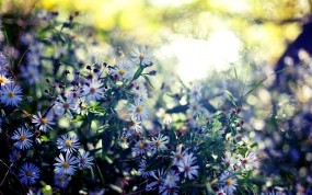Обои Весенние цветы: Цветы, Листья, Весна, Растения, Цветы