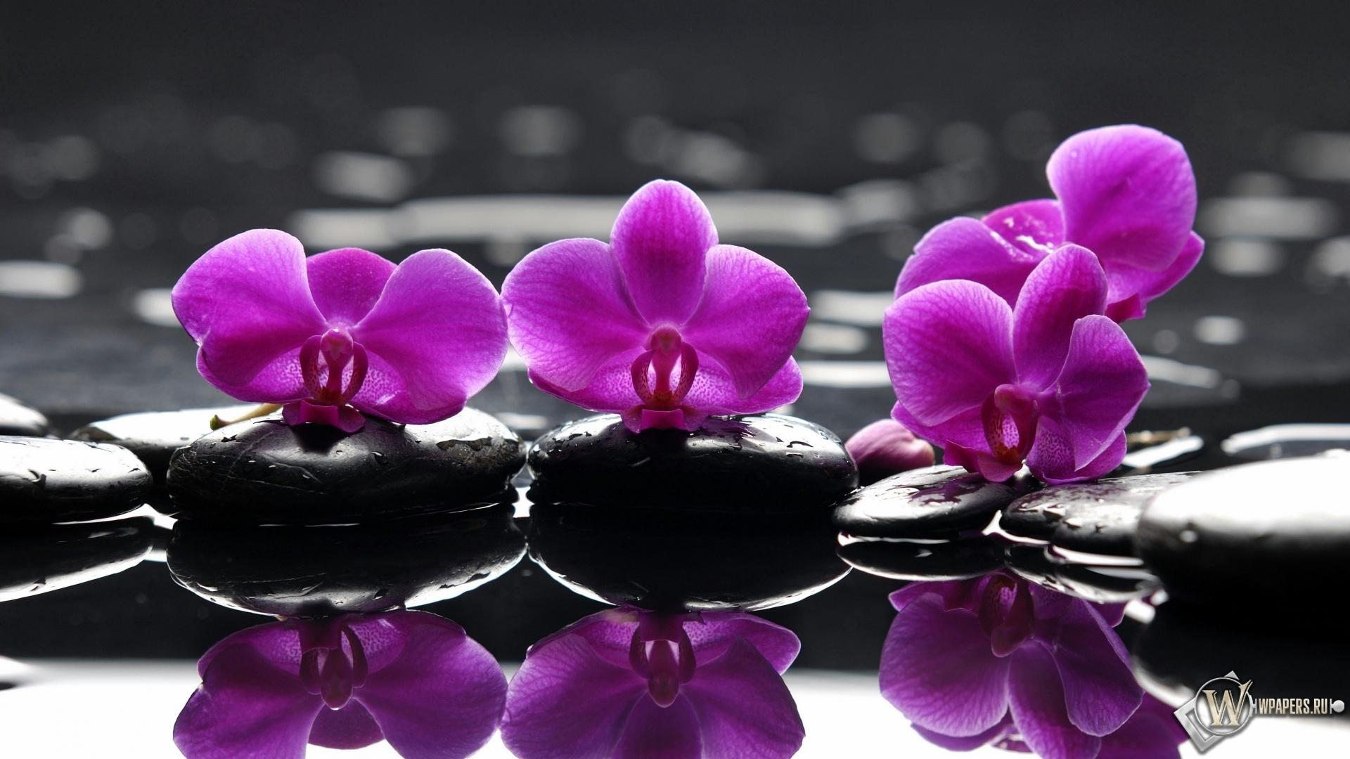 Орхидеи на камнях 1920x1080