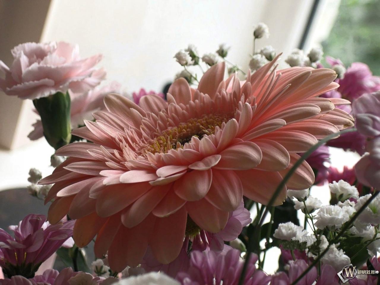 Розовая гербера 1280x960