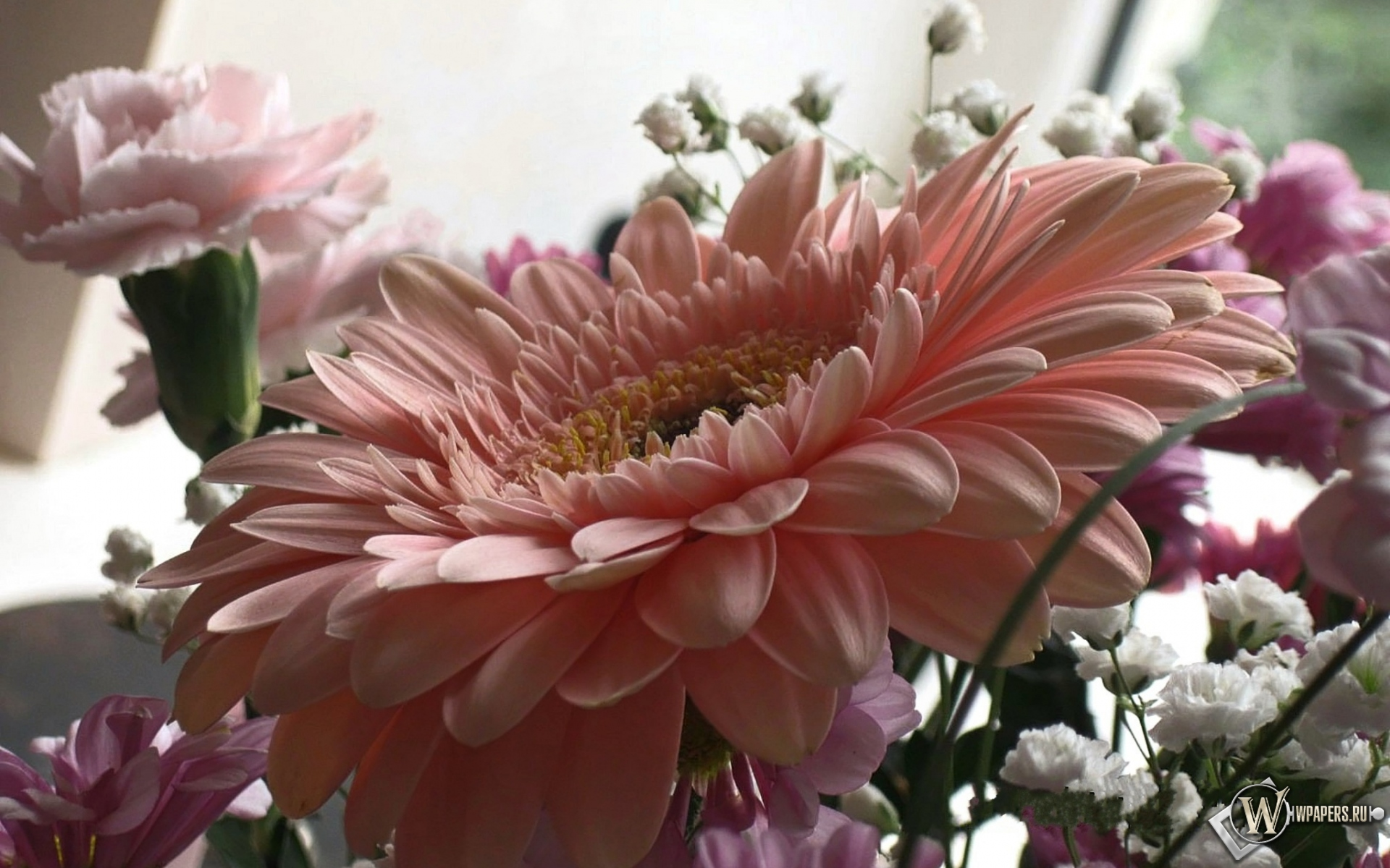 Розовая гербера 1920x1200
