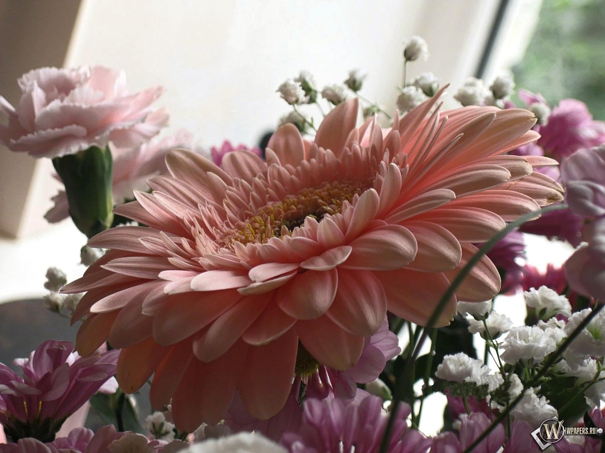 Розовая гербера 2048x1536