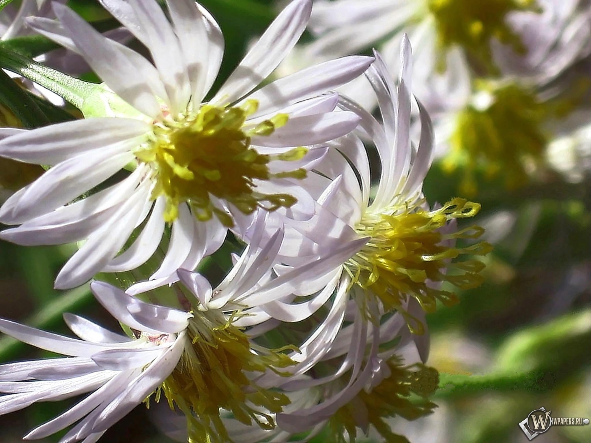 Полевые цветы 2048x1536