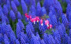 Обои Природный контраст: Природа, Цветы, Лето, Цветы