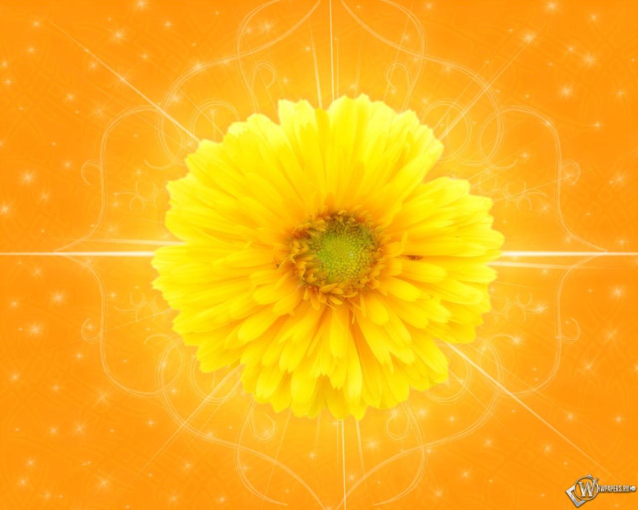 Желтый цветок 1280x1024