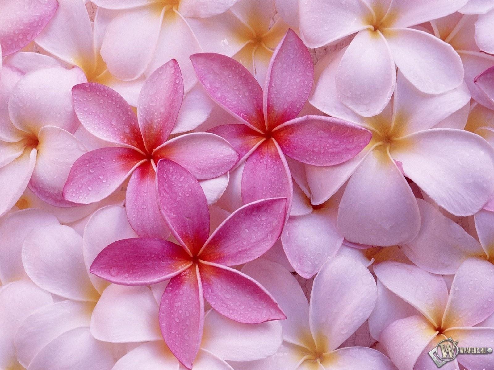 Лепестки цветов 1600x1200