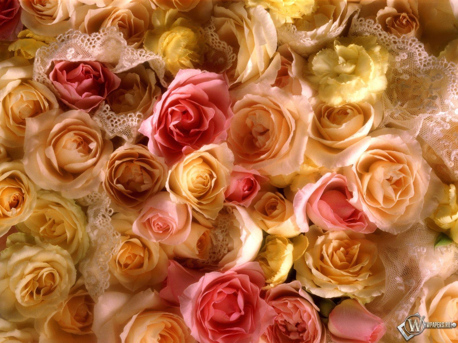 Желтые розы 1600x1200