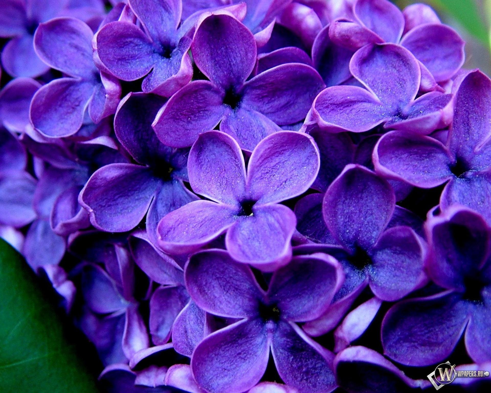 Лиловый цвет на картинках