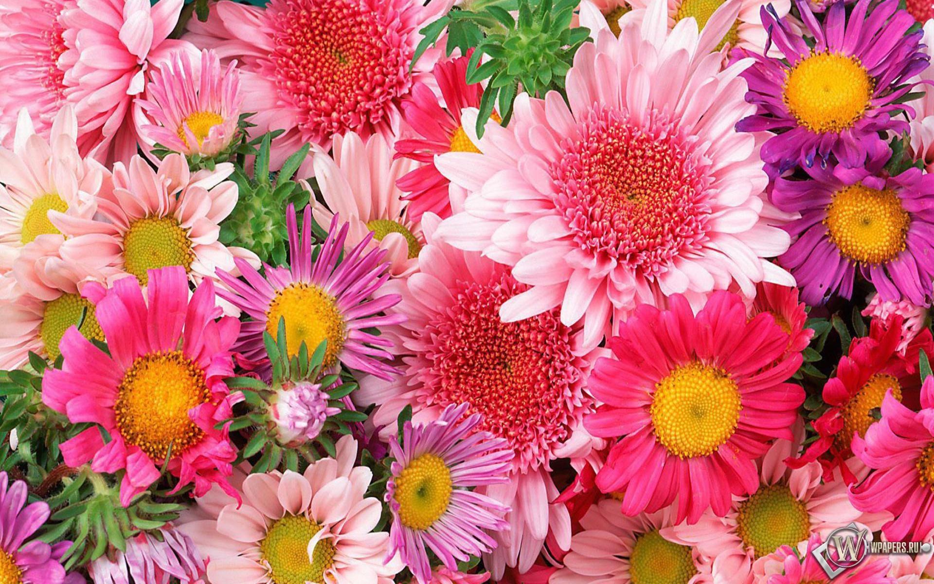 Цветы 1920x1200