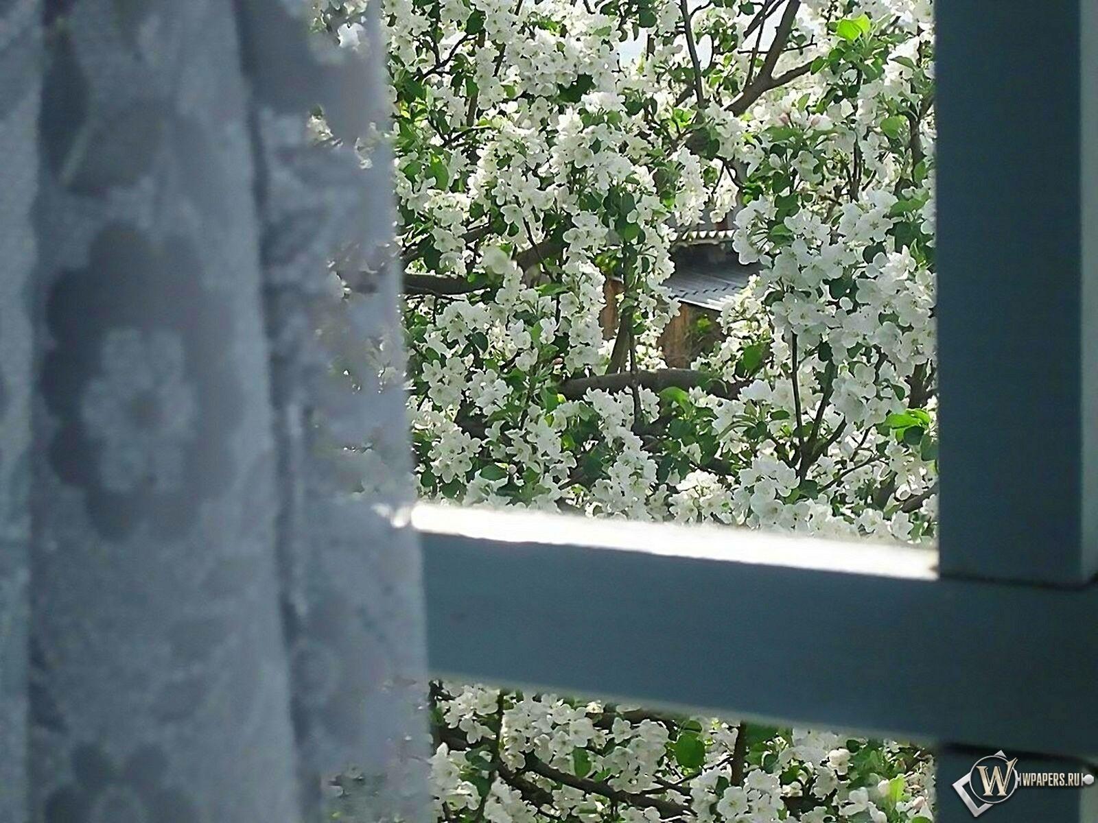 Яблоня за окном 1600x1200